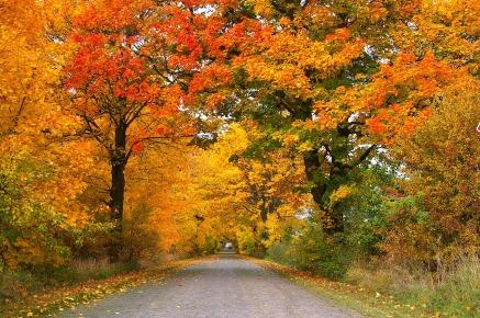 autumn-1010386_1280