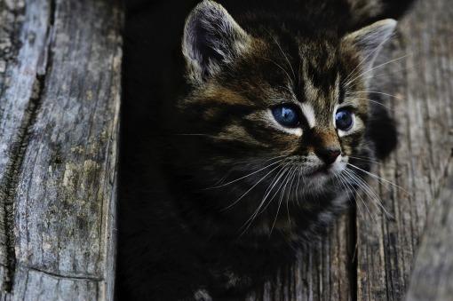 cat-914110_1280