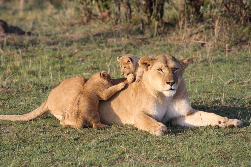 lion-3006875_1280